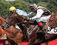 apuestas en carreras de caballos